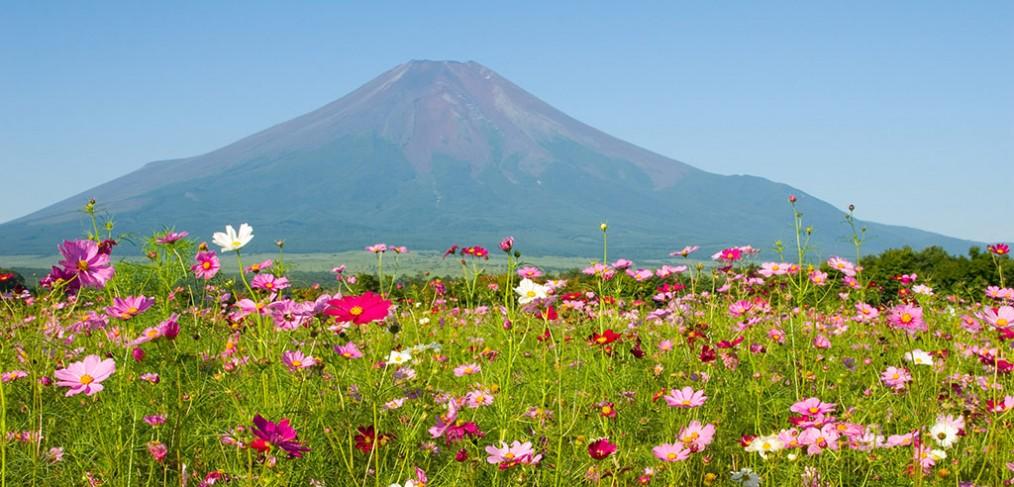 Incontournable a visiter au Japon